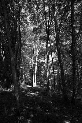 Landscape Photograph - Alone In The Forest by T Campbell