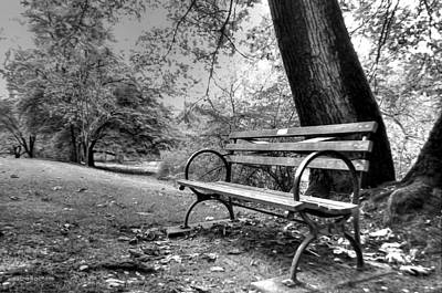 Photograph - Alone In The Park by Sarai Rachel
