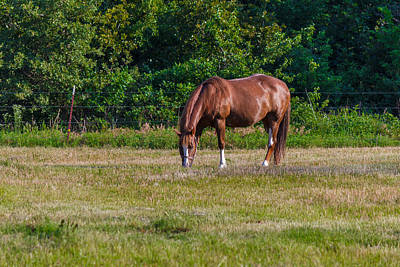 Alone In The Pasture Art Print by Doug Long