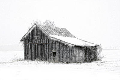 Art Print featuring the photograph Alone In The Snow by Mary Timman