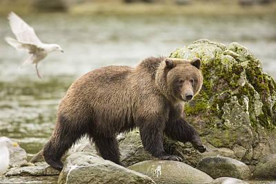 Prints Of Alaska Photograph - Along The Chilkat River by Tim Grams