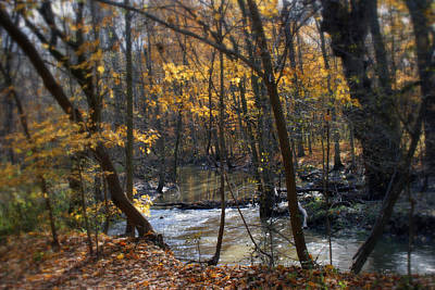 Photograph - Along The Creek In Fall by Kay Novy