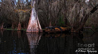 Photograph - Along The Hillsborough River by Barbara Bowen