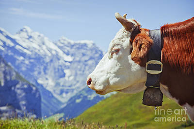 Alpine Cow Art Print by Greg Stechishin