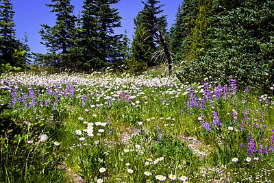 Photograph - Alpine Meadow At Mt.rainier by David Patterson