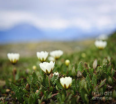 Photograph - Alpine Meadow In Jasper National Park by Elena Elisseeva