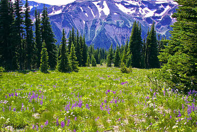Photograph - Alpine Meadow Iv At Mount Rainier by David Patterson