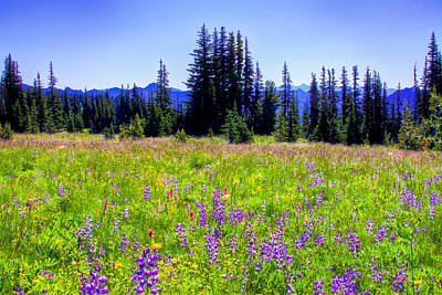 Photograph - Alpine Meadow V At Mount Rainier by David Patterson