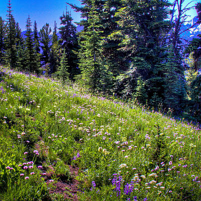 Photograph - Alpine Meadow Vii At Mount Rainier by David Patterson