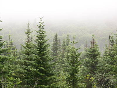 Art Print featuring the photograph Alpine Trees by Robin Regan