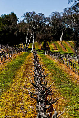 Amador Photograph - Amador Grapes by Mitch Shindelbower