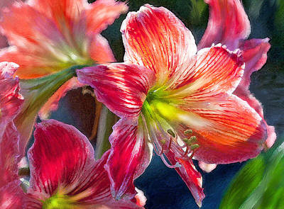 Photograph - Amaryllis by Jane Schnetlage
