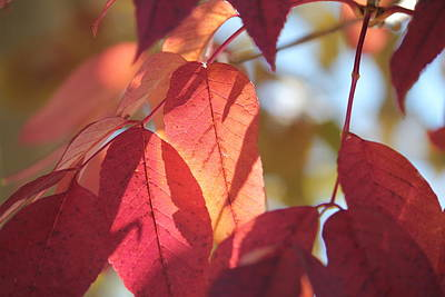 Photograph - Amazing Fall Colors by Trent Mallett