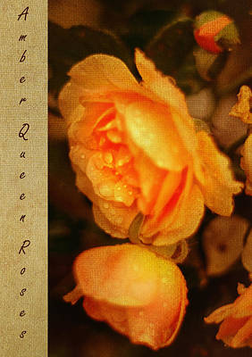 Flower Photograph - Amber Queen Rose by Jenny Rainbow
