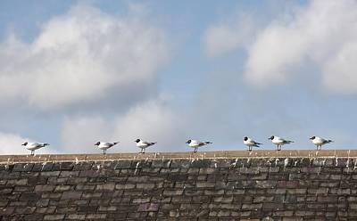 Nirvana - Amble, Northumberland, England Birds by John Short