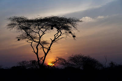 Photograph - Amboseli Sunrise by Marion McCristall