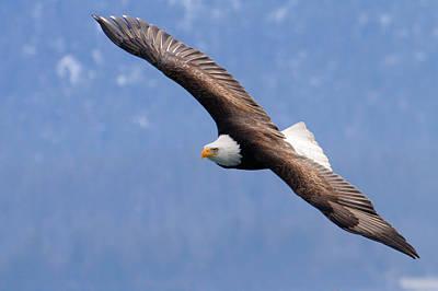 Art Print featuring the photograph American Bald Eagle by Doug Lloyd