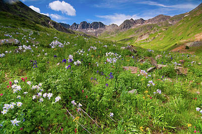 Photograph - American Basin Wildflowers by Steve Stuller