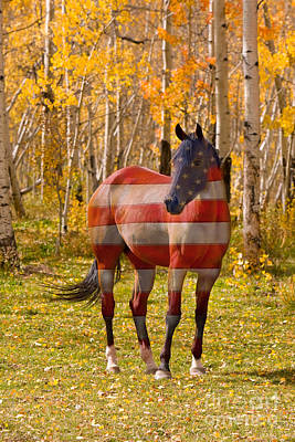 Red White And Blue Photograph - American Bred by James BO  Insogna