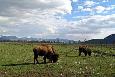 Mellow Yellow - American Buffalo 7 by Douglas Barnett