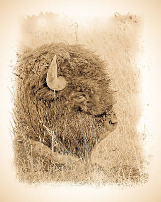Photograph - American Buffalo Antique by Steve McKinzie