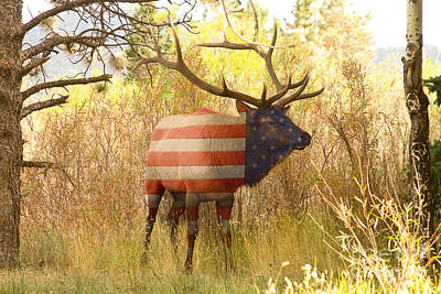 American Bull Elk   Art Print by James BO  Insogna