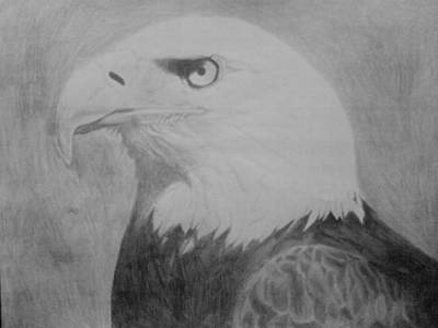 Drawing - American Eagle by Milton  Gore