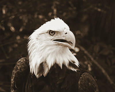 Photograph - American Eagle by Peg Urban