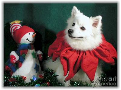 Jester Digital Art - American Eskimo Holiday Fun by Maxine Bochnia