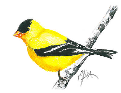 Wall Art - Painting - American Goldfinch by Elisa Gabrielli