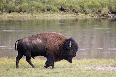 Photograph - American Icon On The Yellowstone River by David Dunham
