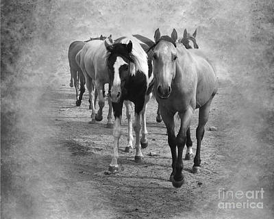 American Quarter Horse Herd In Black And White Art Print by Betty LaRue