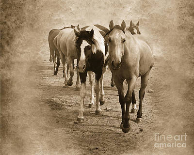Red Dun Horse Photograph - American Quarter Horse Herd In Sepia by Betty LaRue