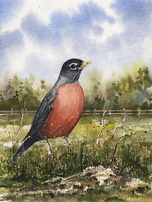 Painting - American Robin by Sam Sidders