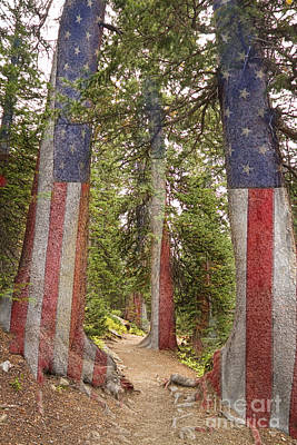 Landmarks Royalty Free Images - American The Beautiful Rocky Mountain Forest  Royalty-Free Image by James BO Insogna