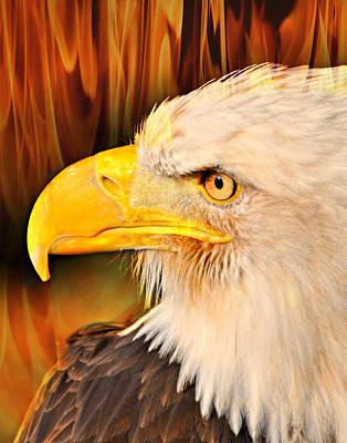 Americasn Bald Eagle Art Print by Marty Koch