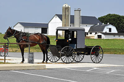 Photograph - Amish Buggy by Helen Haw
