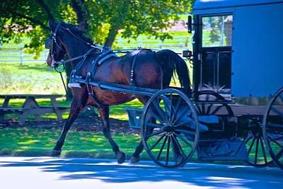 Photograph - Amish Horse And Carriage by Eric Tressler