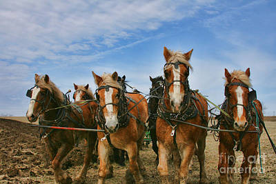Photograph - Amish Plow Day by Crystal Nederman