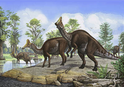 Amurosaurus Riabinini Dinosaurs Grazing Print by Sergey Krasovskiy