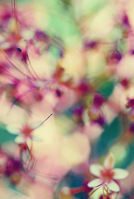 Lkg Photograph - An Abstract Spring by Laura George