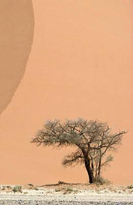 An Acacia Tree Dwarfed By An Immense Art Print