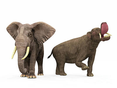 An Adult Platybelodon Compared Art Print by Walter Myers