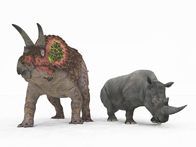 An Adult Triceratops Compared Print by Walter Myers