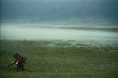 An African Elephant In The Ngorongoro Art Print by Chris Johns