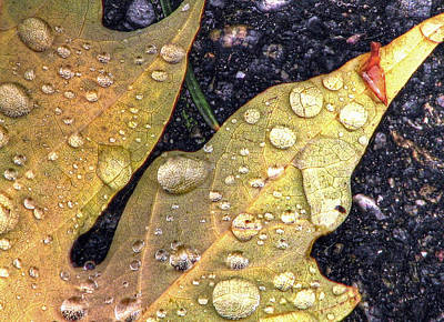 Photograph - An Autumn Leaf by Chris Anderson