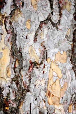 An Bark Of Old Pine Art Print