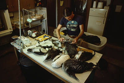 Wildlife Disasters Photograph - An Ecologist Determines The Cause by Michael S. Quinton