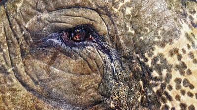 An Elephants Tear Art Print by Kelly Reber