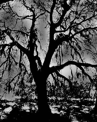Photograph - An Encounter With A Tree by Barbara Middleton
